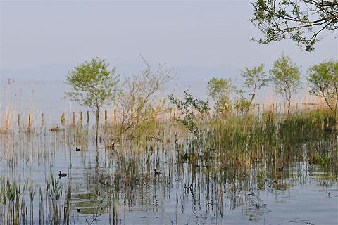 瀬田川のはえの差し込み写真(琵琶湖)